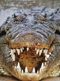 Nile Crocodile, Crocodylus Niloticus, Okavango Delta, Botswana Fotografisk tryk af Frans Lanting