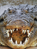 Nile Crocodile, Crocodylus Niloticus, Okavango Delta, Botswana Photographic Print by Frans Lanting