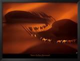 Dromedary Caravan near Nouakchott, Mauritania Prints by Yann Arthus-Bertrand