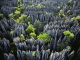 Eroded Limestone Pinnacles (Aerial), Bemaraha National Park, Madagascar Fotografisk tryk af Frans Lanting