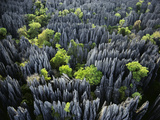 Eroded Limestone Pinnacles (Aerial), Bemaraha National Park, Madagascar Photographic Print by Frans Lanting