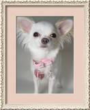 Chihuahua Framed Photographic Print by Renee DeMartin