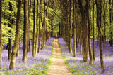 Sentiero nei boschi Foto