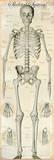 Skeletal System Photo