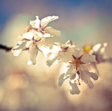 Soft Bloom I Prints by Assaf Frank