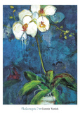Phalaenopsis I Print by Connie Tunick