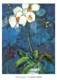Phalaenopsis I Print by Connie Tunick