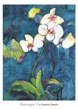 Phalaenopsis II Prints by Connie Tunick