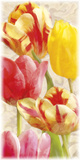 Glowing Tulips I Posters by Janel Pahl