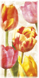Glowing Tulips II Poster by Janel Pahl