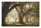Oak Alley Morning Light Poster by William Guion
