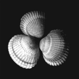 Shell Collection I Prints by Ily Szilagyi