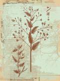 Botanical IV Posters by Ken Hurd