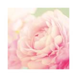 Bloom Prints by Shana Rae