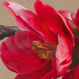 Japonica Blush II Prints by Sarah Caswell