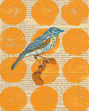 Bird Study I Prints by Meredith Macleod