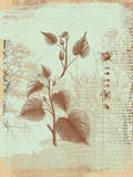 Botanical I Prints by Ken Hurd