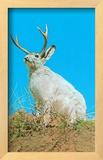 Jackalope, Horned Rabbit Framed Giclee Print