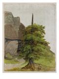 Tree, about 1506 Giclée-Druck von Albrecht Dürer