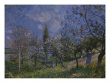 The Orchard, 1881 Prints by Alfred Sisley