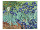 Irises, 1889 Art by Vincent van Gogh
