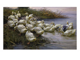 Ducks on the Lakeshore Giclee Print by Alexander Koester