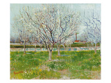 Blossoming Orchard, 1888 Giclee Print by Vincent van Gogh