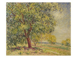 Nut Trees Near Sablons Prints by Alfred Sisley