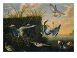 Ein Falke Greift Reiher An(Reiherbeitze) Print by Frans Snyders