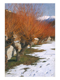 Pastures in the Winter Sun, about 1900 Giclee Print by Alexander Koester