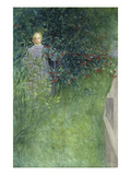 In the Rose Hip Hedge Giclee Print by Carl Larsson