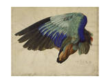 The Right Wing of a Blue Roller, 1524 Reproduction procédé giclée par Albrecht Dürer