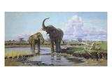Elefanten an Der Wasserstelle Prints by Wilhelm Kuhnert
