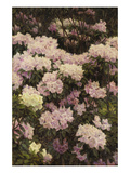 Rhododendrons Print by Alfrida Vilhelmine Ludovica Baadsgaard