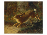 A Hare in a Landscape, 1882 Giclee Print by Emma Mulvad