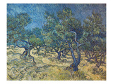 Olivenbaeume (Les Oiliviers), 1889 Giclee Print by Vincent van Gogh