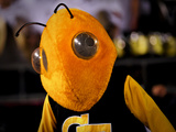 Georgia Institute of Technology: Georgia Tech Yellow Jacket Photographie