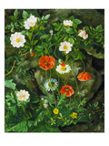 Dog Roses, Poppies and Daisies, 1875 Giclee Print by Augusta Laessoe