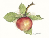 Apple Print on Canvas by Peggy Abrams