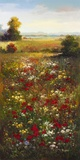 Wildflower Meadow II Print on Canvas by  Arcobaleno