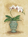 Classic Orchid II Print on Canvas by Peggy Abrams