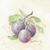 Plums Print on Canvas by Peggy Abrams