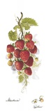 Strawberries Print on Canvas by Peggy Abrams