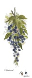 Blueberries Print on Canvas by Peggy Abrams