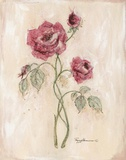 Miniature Rose II Print on Canvas by Peggy Abrams