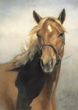 American Quarter Horse Print on Canvas by VI Thurmond