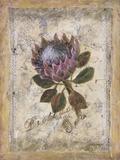 Protea Print on Canvas by Shari White