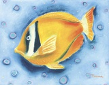 White Banded Island Fish Print on Canvas by Dona Turner