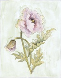 Lavender Poppy ll Print on Canvas by Peggy Abrams