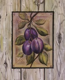 Prune Fructus Print on Canvas by Constance Lael